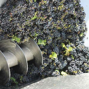 Meerlust Pinot Noir grapes into destemmer 2 - Feb 2013