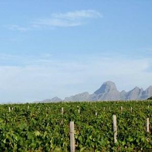Meerlust Estate - Vineyards & Mountains