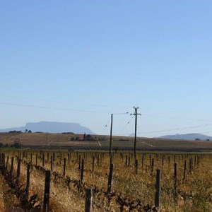 Villiera - wine.co.za visit Sept 2013 - View of Table Mountain