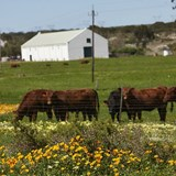 Out & About on Groote Post farm