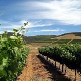 Groote Post Vineyards