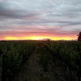 Villiera Wines 2015 Harvest