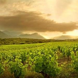 La Vignerie Domaine Grier France.jpg