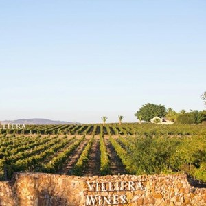 Villiera Wines - Vineyard and Wall
