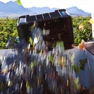 Villiera Harvesting 04.jpg