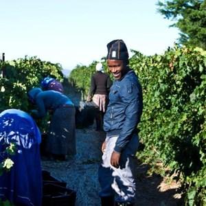 Villiera Harvesting 09 Small.jpg