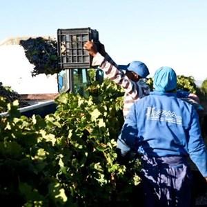 Villiera Harvesting 10 Small.jpg