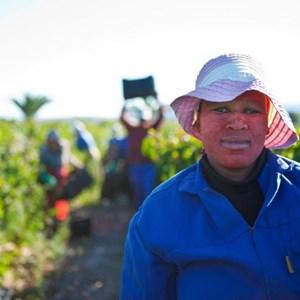 Villiera Harvesting 12 Small.jpg
