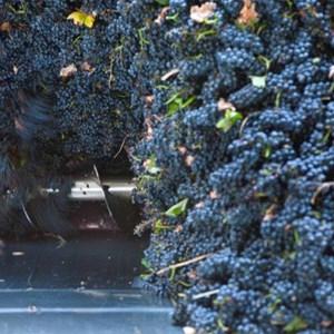 Villiera Harvesting 16 Small.jpg