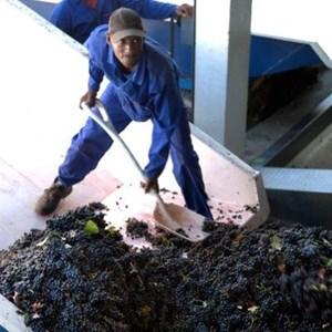 Villiera Harvesting 17.jpg