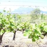 Kleine Draken 2008 Spring Newsletter
