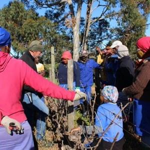 Villiera Winter Pruning (41).jpg