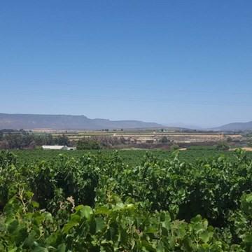 Klawer Wine Cellars: Old Vine Chenin Blanc from Olifantsriver Valley