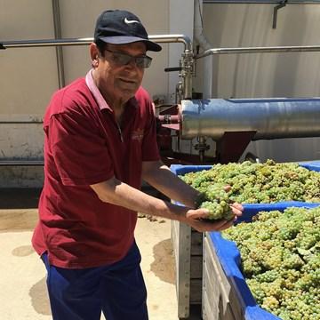 Kleine Draken Harvest Report 2018