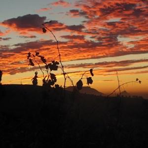 Mandy's Vineyard Cottage - Sunset.jpg
