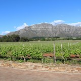 10 Black Vineyards, Winemakers and Wine Brands in South Africa