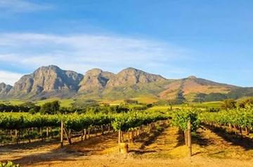 Coastal Regions Amazing Wines In South Africa