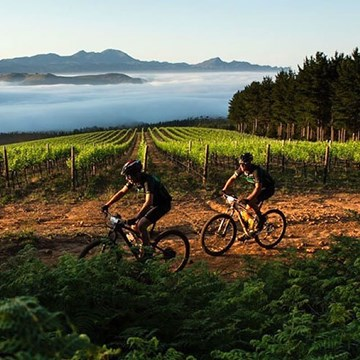 The best Wine Farms for Mountain Biking in the Cape