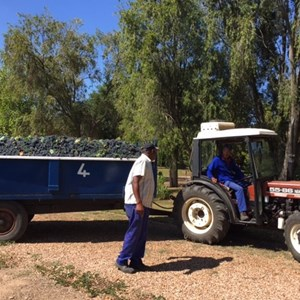18. A full load of Merlot 2016 heading to the cellar
