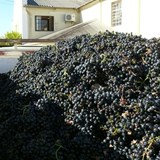 Winemaking at Darling Cellars