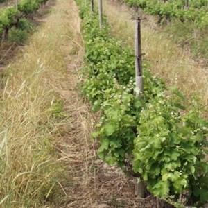 Villiera Wines (37).jpg
