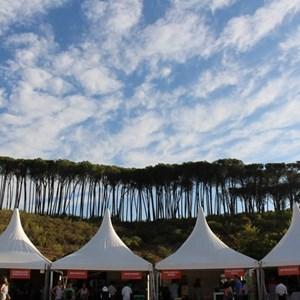 2017 Stellenbosch Wine Fest - wonderful view of trees & clouds