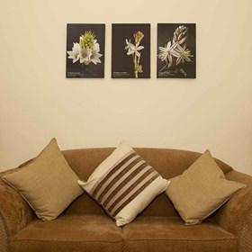 Image - Vineyard Cottage Interior3.jpg