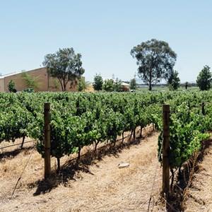 winecoza_villiera_wines_fizzytherapy-141