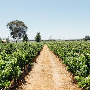 winecoza_villiera_wines_fizzytherapy-142