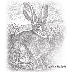 RiverRabbit