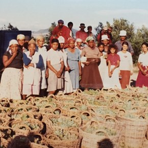 7. Villiera's  first bubly harvest 1984
