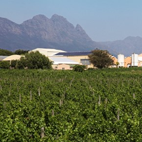 1. Thumbnail Villiera cellar from vineyards 2012