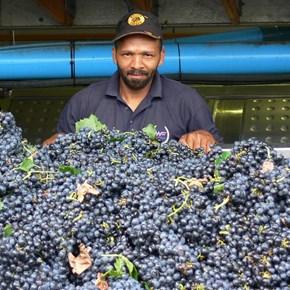 Harvest 2007 Dion