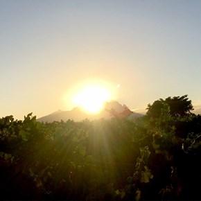 Harvest sunrise at Villiera