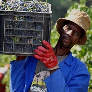 Harvesting lugbox