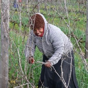 Pruning 2008