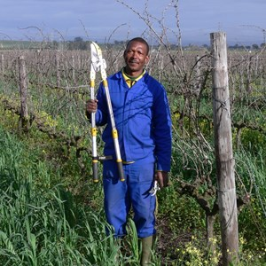 Pruning Christie Franse Vineyard manager