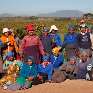 Villiera Harvest Team Small