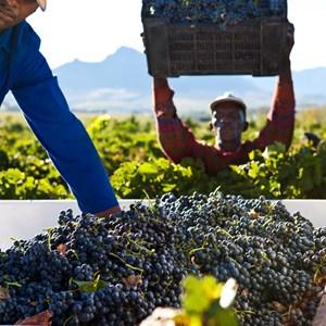 Villiera Harvesting 02