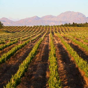 Villiera Vineyards with Helderberg mountains in background