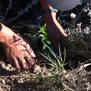 Tree Planting 037