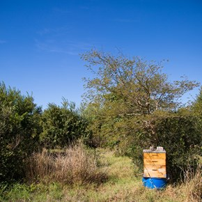 Indigenous Trees and beehive
