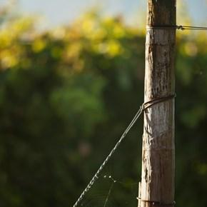 Villiera Spiderweb No Insecticides