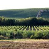 Seven Sisters Vineyards
