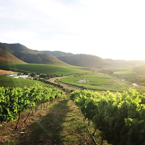 Raka Vineyards