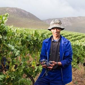Raka Wines_Harvest2019 (65)