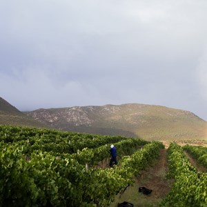 Raka Wines_Harvest2019 (69)
