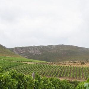 Raka Wines_Harvest2019 (88)