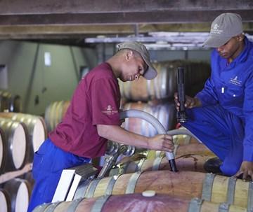 Vineyards and Winemaking