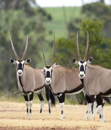 Game Drives & Wildlife Sanctuary